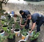 https://www.tp24.it/immagini_articoli/13-09-2018/1536831955-0-mazara-finanza-trovato-coltivazione-marijuana-villetta-tonnarella.jpg