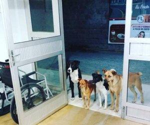 https://www.tp24.it/immagini_articoli/13-12-2018/1544711304-0-senzatetto-ricoverato-ospedale-suoi-cani-aspettano-fuori-porta.jpg