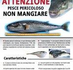 https://www.tp24.it/immagini_articoli/14-03-2018/1521024101-0-egadi-occhio-pescate-pesce-palla-tossico-mangiate-morire.jpg