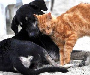 https://www.tp24.it/immagini_articoli/14-03-2020/1584143403-0-cani-gatti-trasmettono-coronavirus.jpg