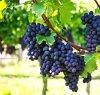 https://www.tp24.it/immagini_articoli/14-10-2021/1634220537-0-vinitaly-crescono-le-vendite-dei-vini-siciliani-nero-d-avola-nella-top-ten.jpg