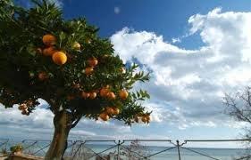 https://www.tp24.it/immagini_articoli/14-11-2019/1573712545-0-agricoltori-tutta-siclia-piazza-troppa-burocrazia-politiche-fallimentari.jpg
