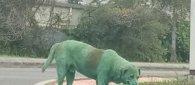 https://www.tp24.it/immagini_articoli/14-11-2019/1573744463-0-cane-imbrattato-verde-avvelenato-vernice-notizia-commuove-mondo.jpg