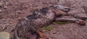 https://www.tp24.it/immagini_articoli/14-11-2019/1573770351-0-castelvetrano-cane-sbranato-rifugio-abusivo-signorello.jpg