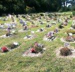 https://www.tp24.it/immagini_articoli/14-12-2018/1544802956-0-erice-consigliere-chiede-cimitero-animali.jpg