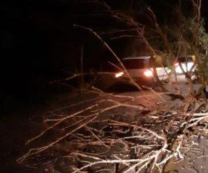 https://www.tp24.it/immagini_articoli/14-12-2019/1576304724-0-soffia-vento-record-tutta-sicilia-allerta-alberi-sulle-auto-crolli.jpg