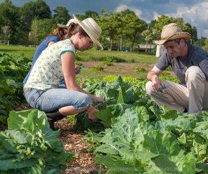 https://www.tp24.it/immagini_articoli/15-02-2016/1455546503-0-petrosino-si-chiamera-10-100-1000-il-comitato-dei-giovani-agricoltori-della-provincia.jpg