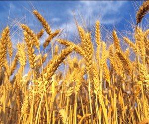 https://www.tp24.it/immagini_articoli/15-02-2017/1487151820-0-agroalimentare-gli-agronomi-trapanesi-lanciano-l-allarme-sul-grano-canadese.jpg
