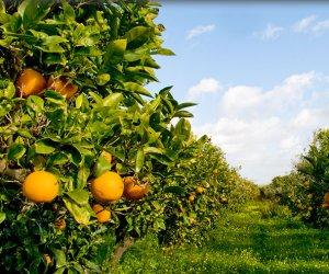 https://www.tp24.it/immagini_articoli/15-04-2015/1429082681-0-sicilia-domani-un-convegno-a-palermo-per-le-nuove-sfide-in-agricoltura.jpg