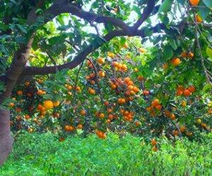 https://www.tp24.it/immagini_articoli/15-05-2019/1557931597-0-nasce-sicilia-proposta-creare-distretto-cibo.jpg