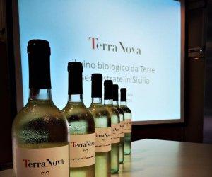 https://www.tp24.it/immagini_articoli/15-09-2016/1473925089-0-nasce-terranova-il-vino-biologico-da-terre-sequestrate-alla-mafia.jpg