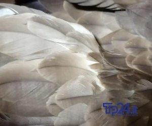 https://www.tp24.it/immagini_articoli/15-09-2019/1568535232-0-marsala-raro-esemplare-falco-stato-abbattuto-ucciso-teodoro-immagini.jpg