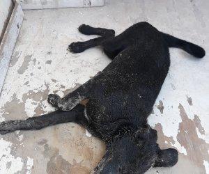 https://www.tp24.it/immagini_articoli/15-09-2019/1568542482-0-cane-investito-ucciso-auto-pirata-marausa-nessuno-soccorso.jpg