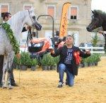https://www.tp24.it/immagini_articoli/15-10-2018/1539597000-0-concorso-morfologia-cavalli-razza-araba-stato-vinto-hanaya-karam.jpg