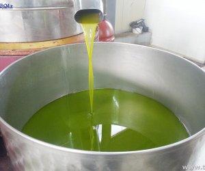 https://www.tp24.it/immagini_articoli/15-11-2016/1479219878-0-sabato-a-campobello-un-convegno-sull-olio-extra-vergine-d-oliva.jpg