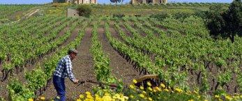 https://www.tp24.it/immagini_articoli/16-02-2020/1581849951-0-siccita-caldo-invernale-mettono-rischio-colture-siciliane.jpg