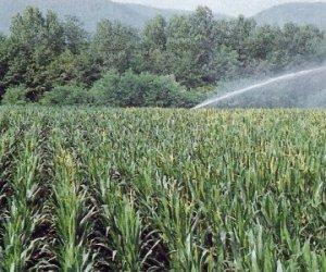 https://www.tp24.it/immagini_articoli/16-04-2016/1460799173-0-trapani-aumento-di-cinque-volte-dei-canoni-irrigui-protestano-gli-agricoltori.jpg