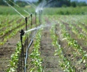 https://www.tp24.it/immagini_articoli/16-06-2019/1560684620-0-castelvetrano-agricoltori-laumento-canoni-irrigui.jpg