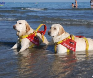 https://www.tp24.it/immagini_articoli/16-07-2017/1500202287-0-alcamo-cani-salvano-giovane-stava-annegando.jpg