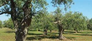 https://www.tp24.it/immagini_articoli/16-09-2019/1568591309-0-vitigni-olivi-produttori-vinicoli-siciliani-chiedono-minimo-garantito.jpg