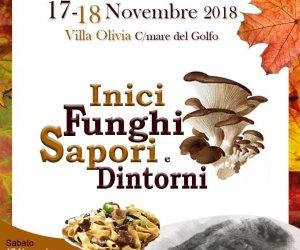 https://www.tp24.it/immagini_articoli/16-11-2018/1542394281-0-trapani-inici-funghi-sapori-dintorni-giorni-dedicati-funghi-monte-inici.jpg