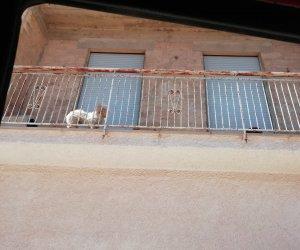 https://www.tp24.it/immagini_articoli/17-02-2020/1581973407-0-marsala-cane-maltrattato-liberato-vigili-denunciati-proprietari.jpg