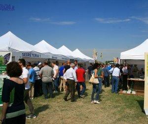 https://www.tp24.it/immagini_articoli/17-03-2018/1521289216-0-viticoltura-maggio-marsala-enopolis-prove-campo-formazione-professionale.jpg