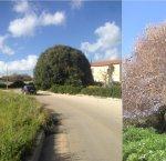 https://www.tp24.it/immagini_articoli/17-04-2018/1523994803-0-castelvetrano-avvelenato-grande-ficus-selinunte.jpg