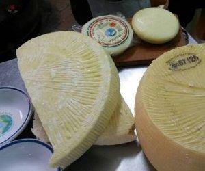 https://www.tp24.it/immagini_articoli/17-06-2014/1402982248-0-la-vastedda-il-formaggio-che-porta-alla-ribalta-il-belice.jpg