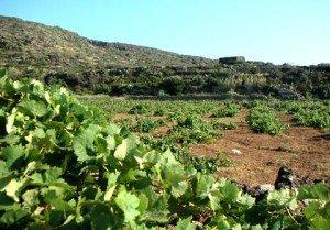 https://www.tp24.it/immagini_articoli/17-06-2016/1466139908-0-benedetto-renda-nuovo-presidente-del-consorzio-doc-pantelleria.jpg