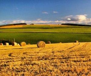 https://www.tp24.it/immagini_articoli/17-09-2015/1442492576-0-agricoltura-siciliana-boom-di-occupati-tra-i-giovani-le-storie-e-i-numeri.jpg