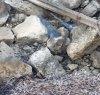 https://www.tp24.it/immagini_articoli/17-09-2019/1568730408-0-trapani-ratti-passeggio-viale-sirene-video.jpg