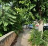 https://www.tp24.it/immagini_articoli/17-09-2021/1631881097-0-marsala-nbsp-il-marciapiede-e-nbsp-le-erbacce-in-via-salemi-vicino-alla-mario-nuccio.jpg