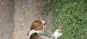https://www.tp24.it/immagini_articoli/17-11-2019/1574022106-0-trapani-cane-ucciso-pirata-strada.jpg