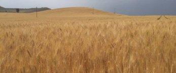 https://www.tp24.it/immagini_articoli/18-04-2021/1618725496-0-agricoltura-la-sicilia-rischia-di-perdere-123-milioni-nbsp.jpg
