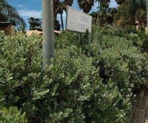 https://www.tp24.it/immagini_articoli/18-05-2021/1621334728-0-marsala-degrado-e-abbandono-nell-area-verde-comunale-vicino-il-delfino.jpg