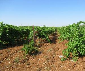 https://www.tp24.it/immagini_articoli/18-07-2019/1563441803-0-frodi-alimentari-controlli-sicilia-occidentale-legalita-anche-altre-regioni.jpg