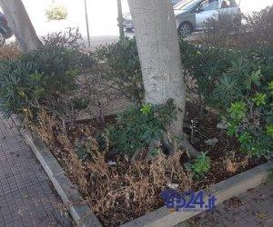 https://www.tp24.it/immagini_articoli/18-07-2019/1563457986-0-trapani-degrado-abbandono-piazza-ciaccio-montalto-immagini.jpg