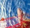 https://www.tp24.it/immagini_articoli/18-08-2021/1629306713-0-sicilia-uno-squalo-capopiatto-intrappolato-in-una-rete-salvato-da-un-pescatore.jpg