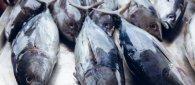 https://www.tp24.it/immagini_articoli/18-09-2021/1631980577-0-nbsp-il-tonno-del-mediterraneo-il-piu-inquinato-al-mondo-dal-mercurio.jpg