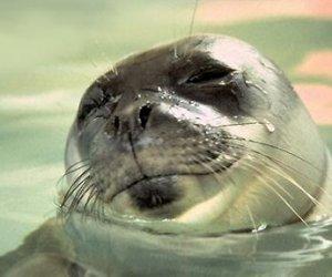 https://www.tp24.it/immagini_articoli/18-10-2013/1382091168-0-completato-lallestimento-dellosservatorio-foca-monaca-a-marettimo.jpg