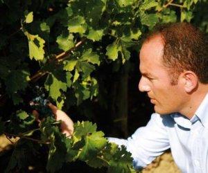 https://www.tp24.it/immagini_articoli/18-11-2016/1479449549-0-vino-sicilia-sempre-piu--doc-blindati-nero-d-avola-e-grillo.jpg