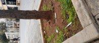 https://www.tp24.it/immagini_articoli/18-11-2019/1574092728-0-degrado-marsala-siringhe-terra-roma.jpg