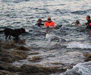 https://www.tp24.it/immagini_articoli/19-03-2017/1489932720-0-pantelleria-premio-eroi-del-mare-ai-soccorritori-dei-delfini.jpg