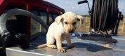 https://www.tp24.it/immagini_articoli/19-03-2019/1552975396-0-campobello-mazara-vigili-fuoco-salvano-cagnolino-caduto-pozzo.jpg