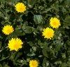 https://www.tp24.it/immagini_articoli/19-03-2021/1616194704-0-a-trapani-una-delle-50-specie-di-piante-piu-rare-al-mondo.jpg