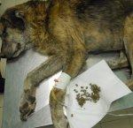 https://www.tp24.it/immagini_articoli/19-09-2018/1537375165-0-canili-lager-castelvetrano-parlano-veterinari-cani-venivano-curati.jpg