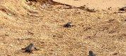 https://www.tp24.it/immagini_articoli/19-09-2021/1632041601-0-petrosino-la-nascita-di-47-tartatughine-in-spiaggia-a-biscione.jpg