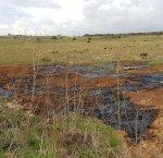 https://www.tp24.it/immagini_articoli/19-11-2017/1511081436-0-campobello-mazara-acque-scarto-frantoi-scaricate-unarea-protetta.jpg