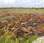 https://www.tp24.it/immagini_articoli/19-11-2017/1511108083-0-ecco-quali-sono-zone-protette-inquinate-marsala-mazara.jpg